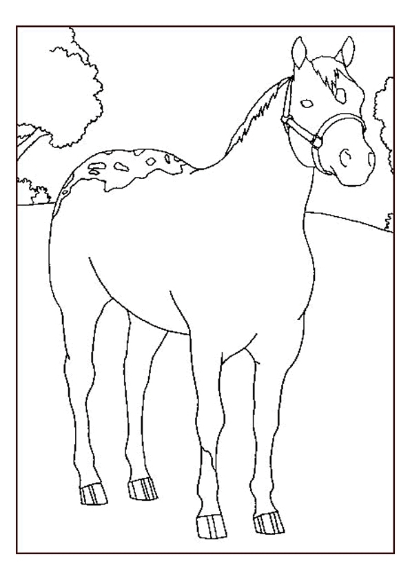 Gratis kleurplaat paard 42