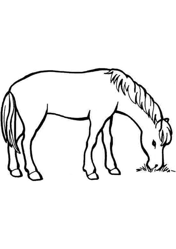 Gratis kleurplaat paard 46