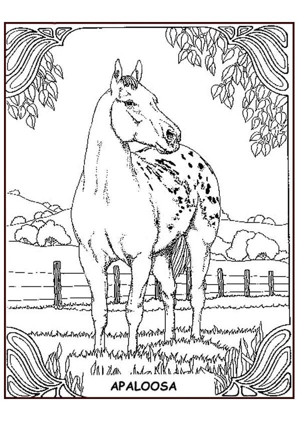 Gratis kleurplaat paard in weiland