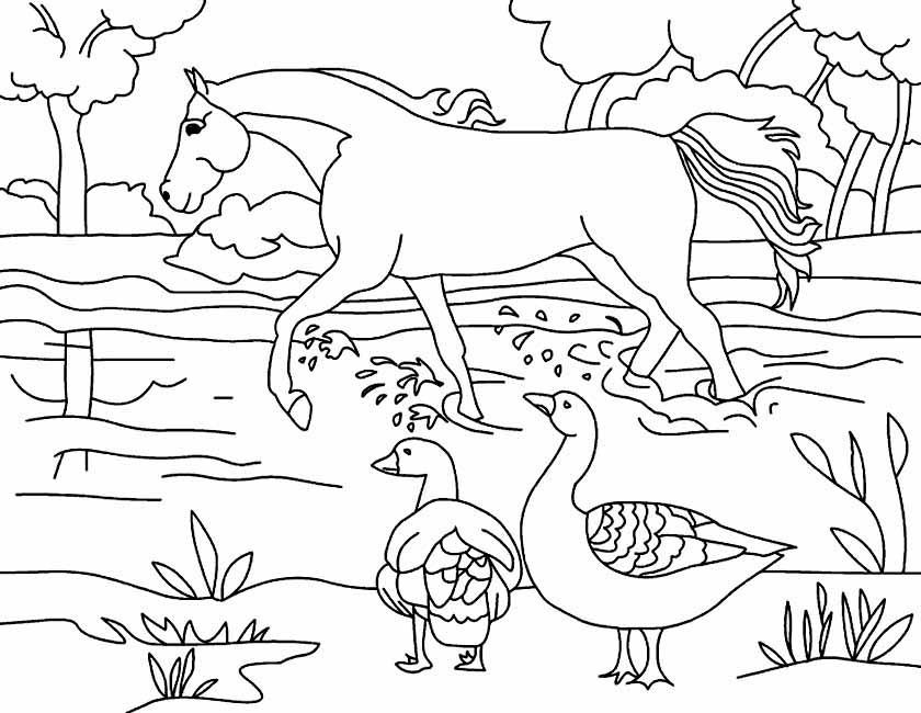 Gratis kleurplaat ganzen en paard in de wei