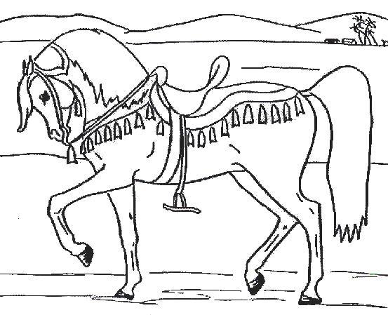 Gratis kleurplaat paard 11