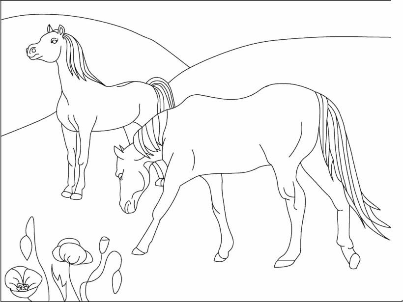 Gratis kleurplaat 2 paarden 16
