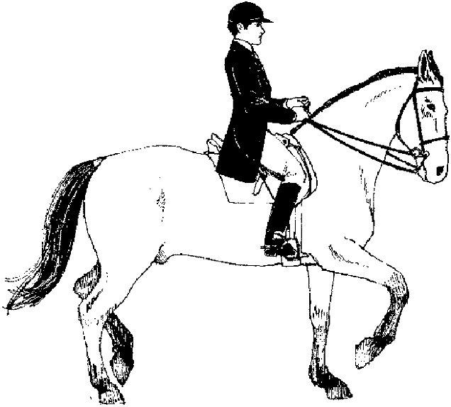 Kleurplaten Paarden Gratis.Kleuren Nu Ruiter Op Paard Kleurplaten