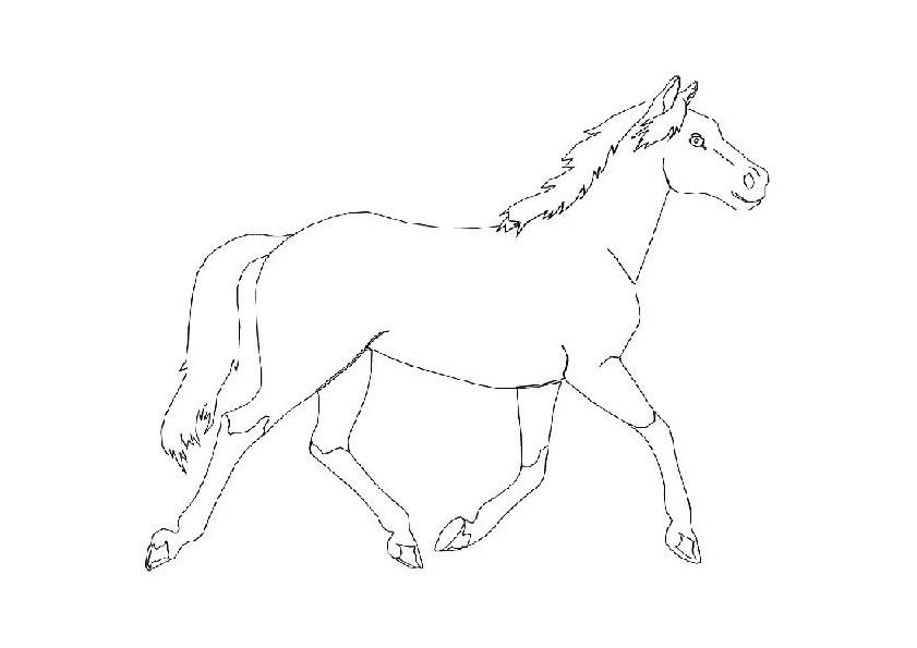 kleuren nu paard in draf kleurplaten