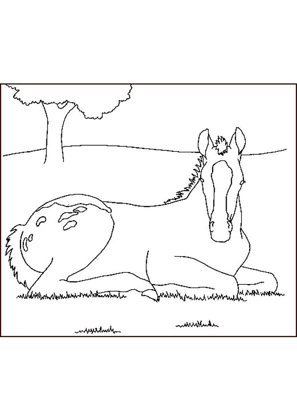 Gratis kleurplaat paard 43