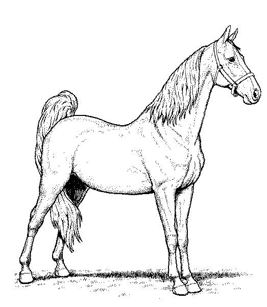 Gratis kleurplaat paard 5
