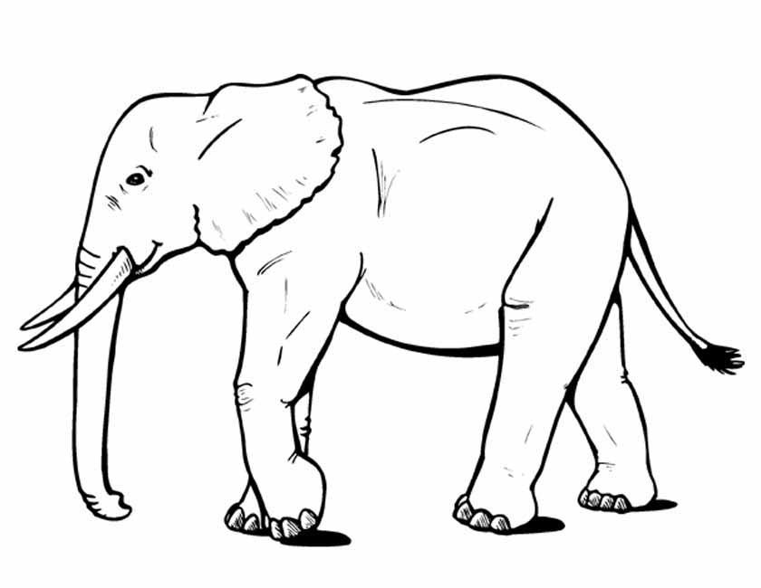 Gratis kleurplaat Mooie olifant met slagtanden