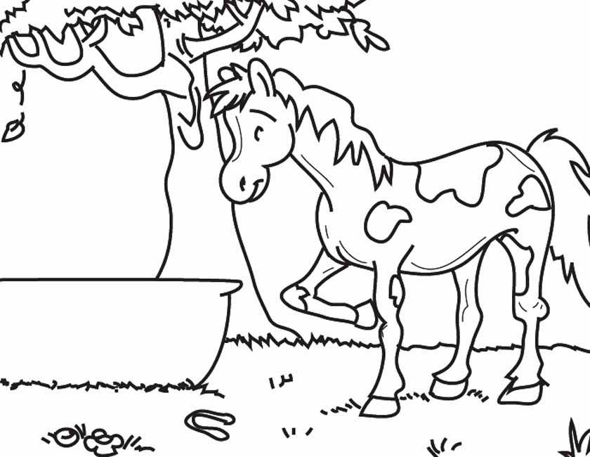 Kleurplaten Paarden In De Wei.Kleuren Nu Paard In Het Gras Kleurplaten