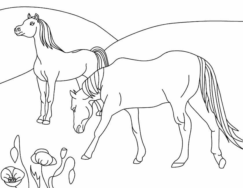 kleuren nu paarden in de wei kleurplaten