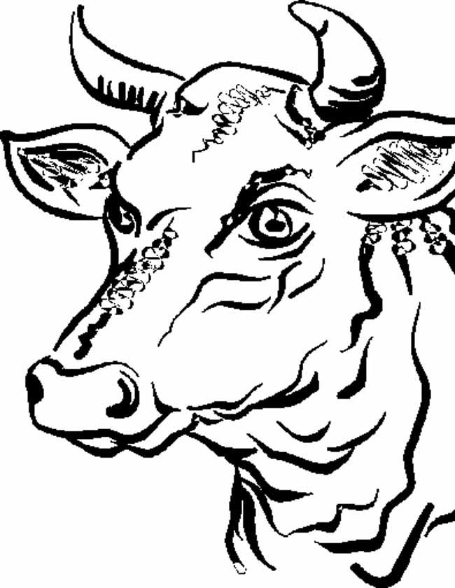 Gratis kleurplaat pas op voor deze stier