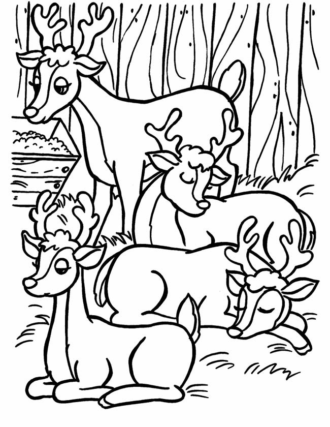 Gratis kleurplaat Vier rendieren in het bos